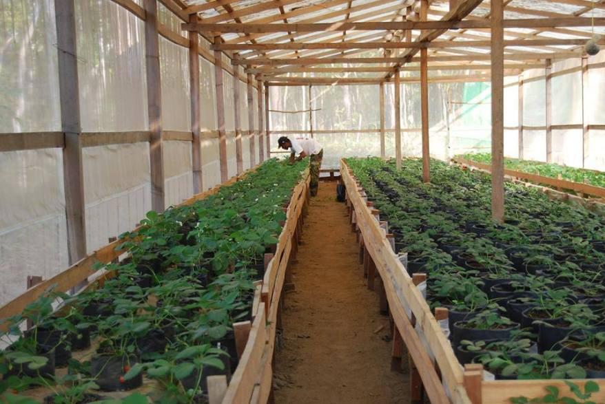 organic farm 3